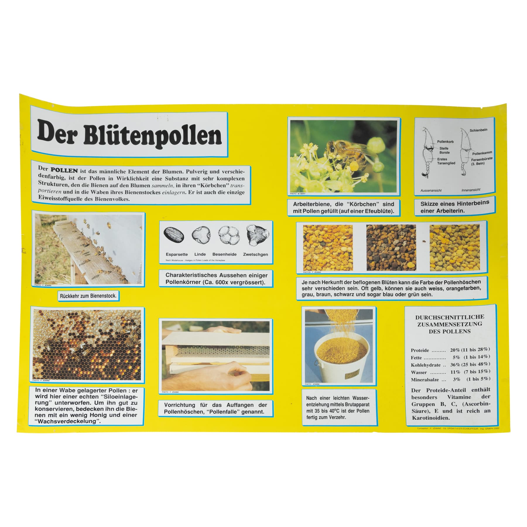 Bienenweide Tübinger Mischung 100 cm, 20 g Samen
