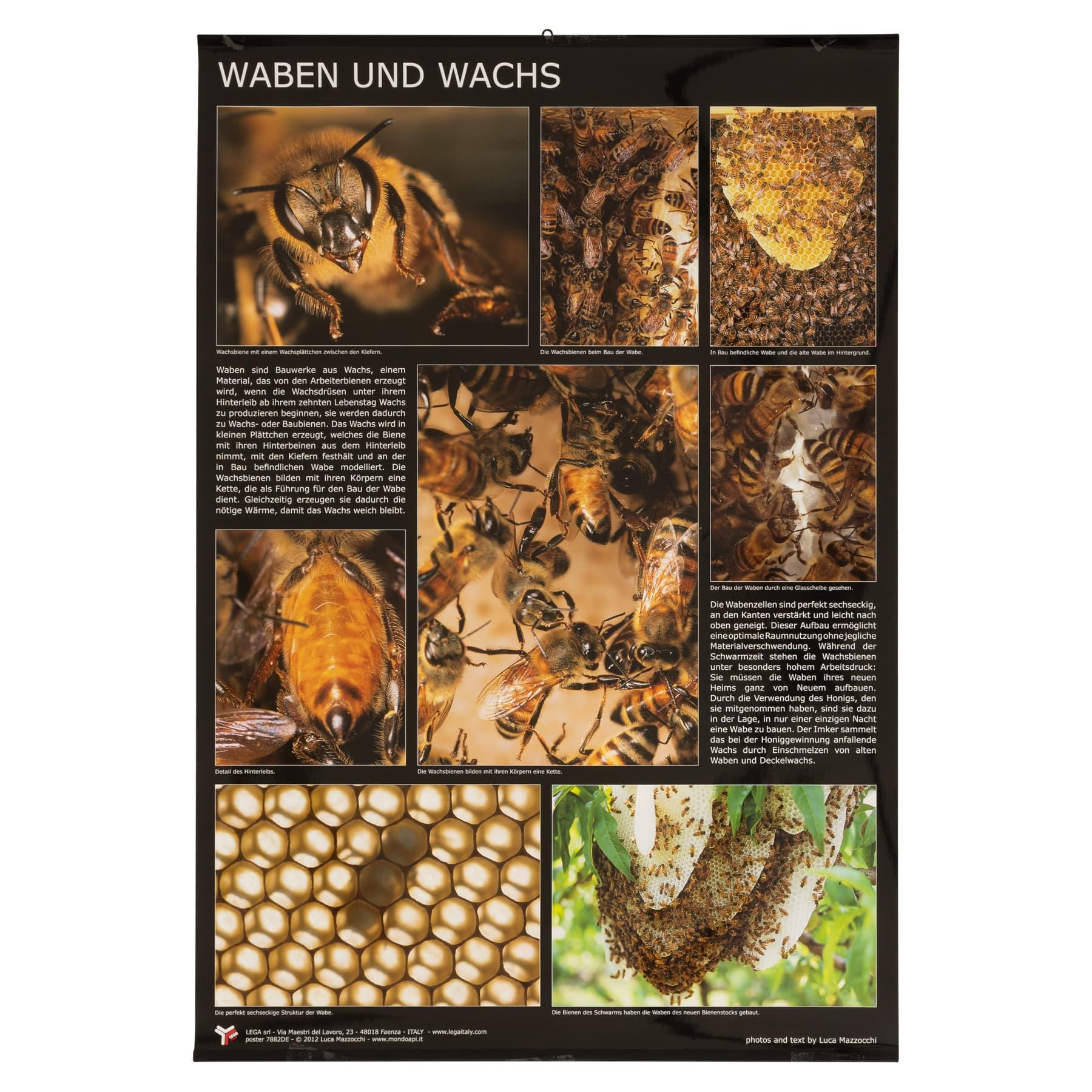 """Plakat/Poster """"Waben und Wachs""""  60 cm breit 90 cm hoch"""