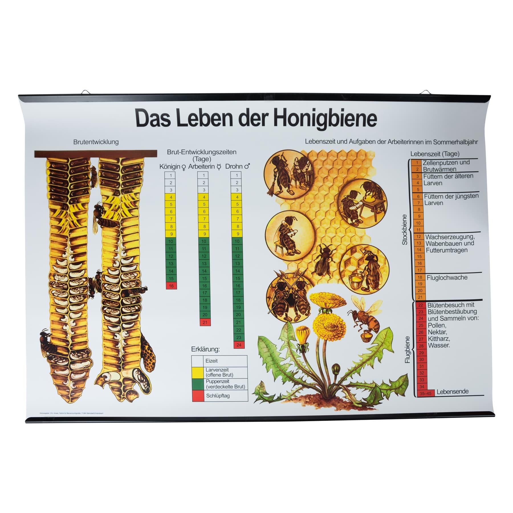 """Plakat """"Das Leben der Honigbiene"""" niederländisch"""