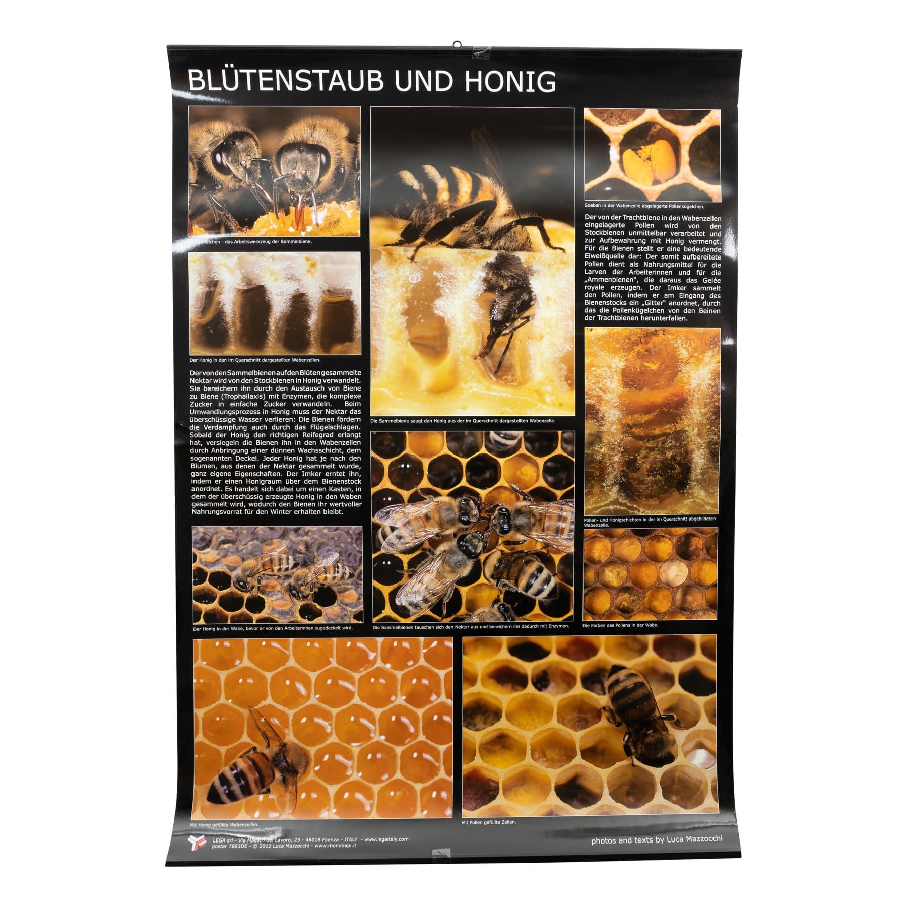 Plakat/Poster Blütenstaub (Pollen) und Honig 60 cm breit 90 cm hoch